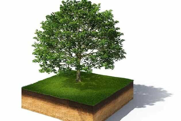 що робити, коли дерево росте на межі